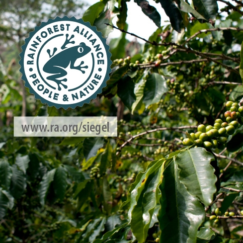 Rainforest Certified Kaffees